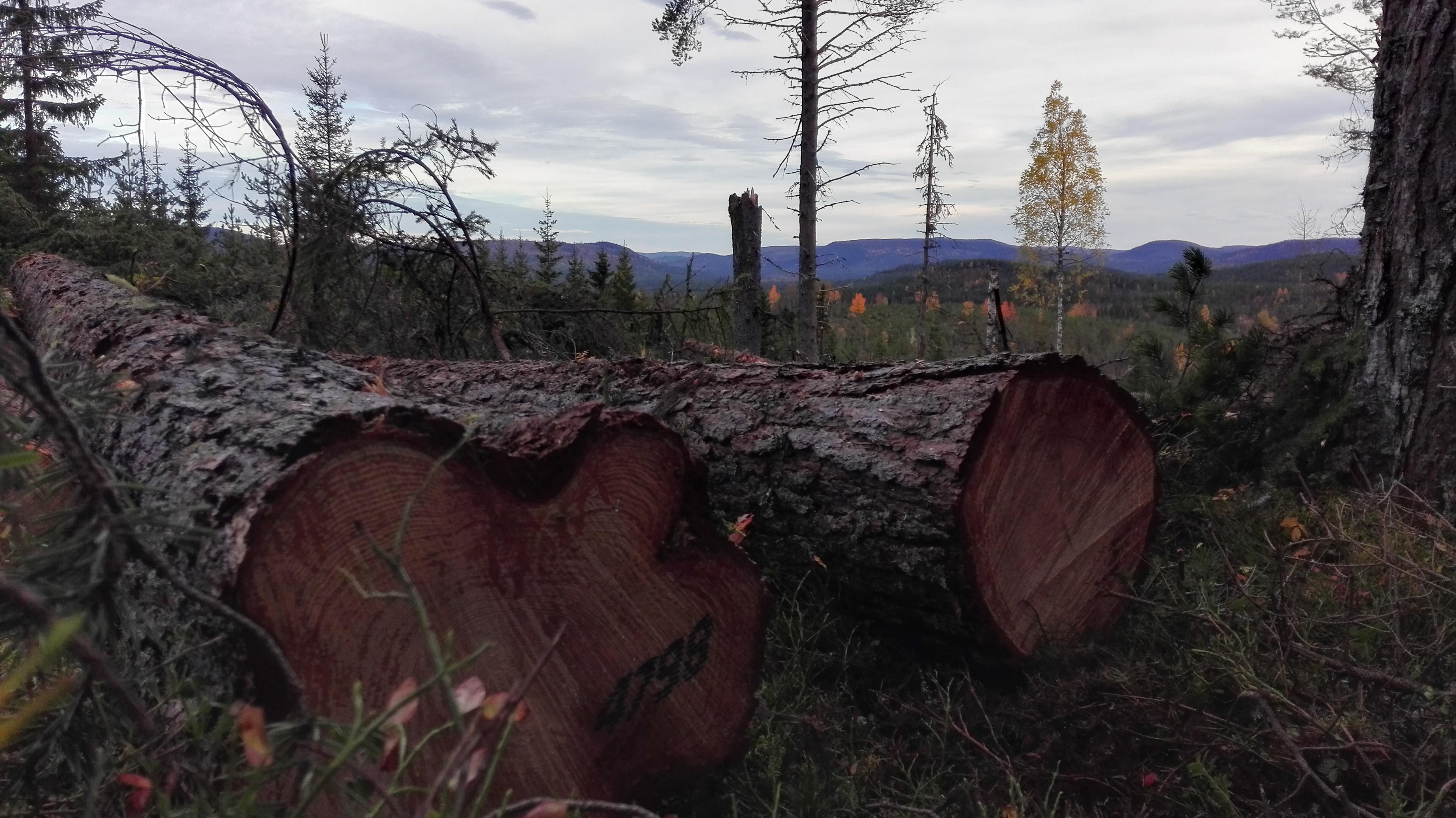 Märkning i skogen